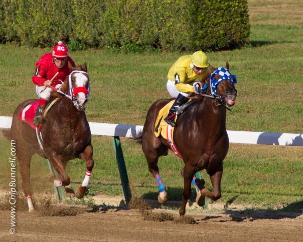 Hialeah Horses_BUNNELL-01052013-146
