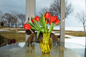 Sadly, the only tulips I saw yesterday were in this vase at my mom's house.