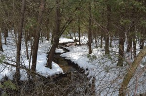 It's an impressively bubbly creek through a ridiculous amount of snow.