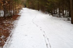 April drunken deer tracks