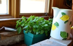 Summer tea garden