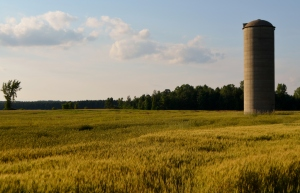 There's sort of a proud but melancholy look to our cabin silo and I think it sets just about the right tone for the waning days of summer.