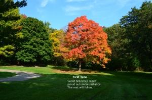 First Tree Haiku