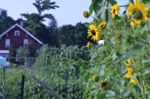 Garden of Plenty 059