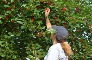 Me Cherry Picking