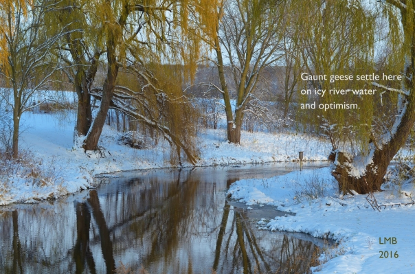 Weeping Willow Haiku
